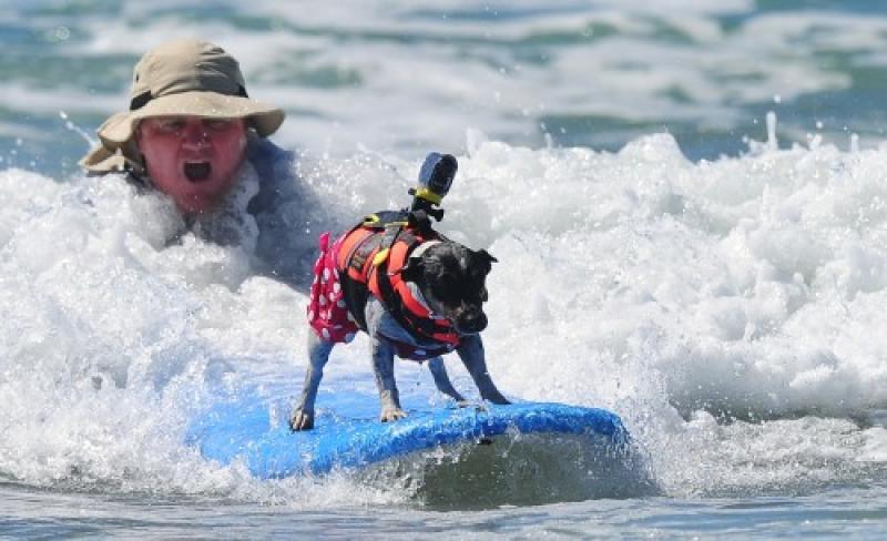 Gare di surf… per cani